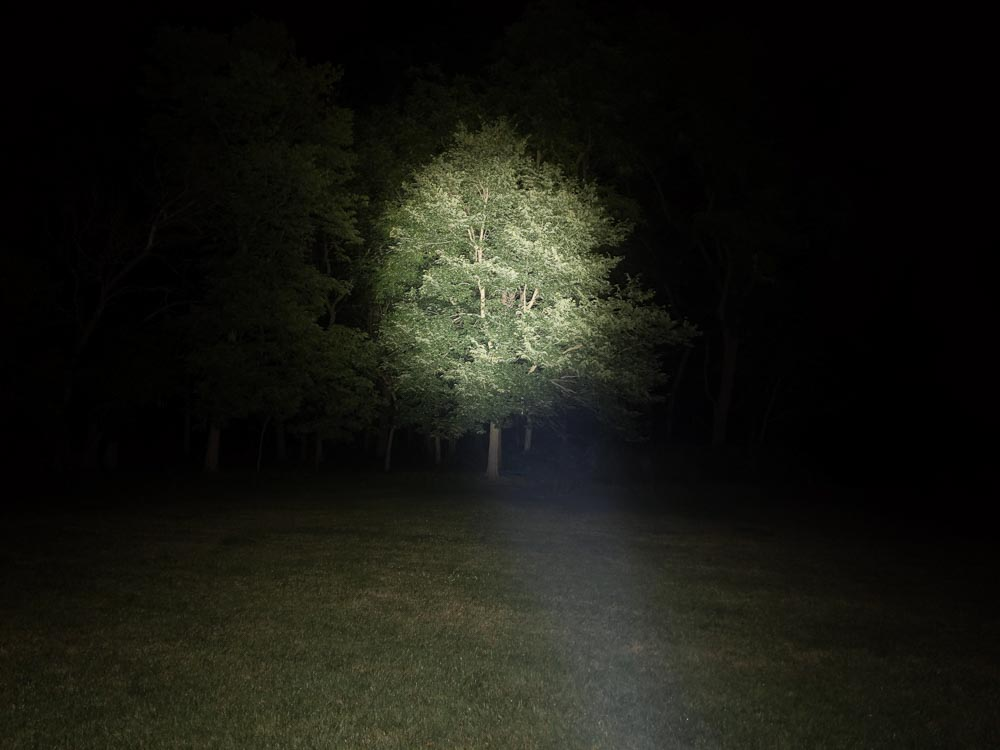 beamshot on trees of Olight Odin