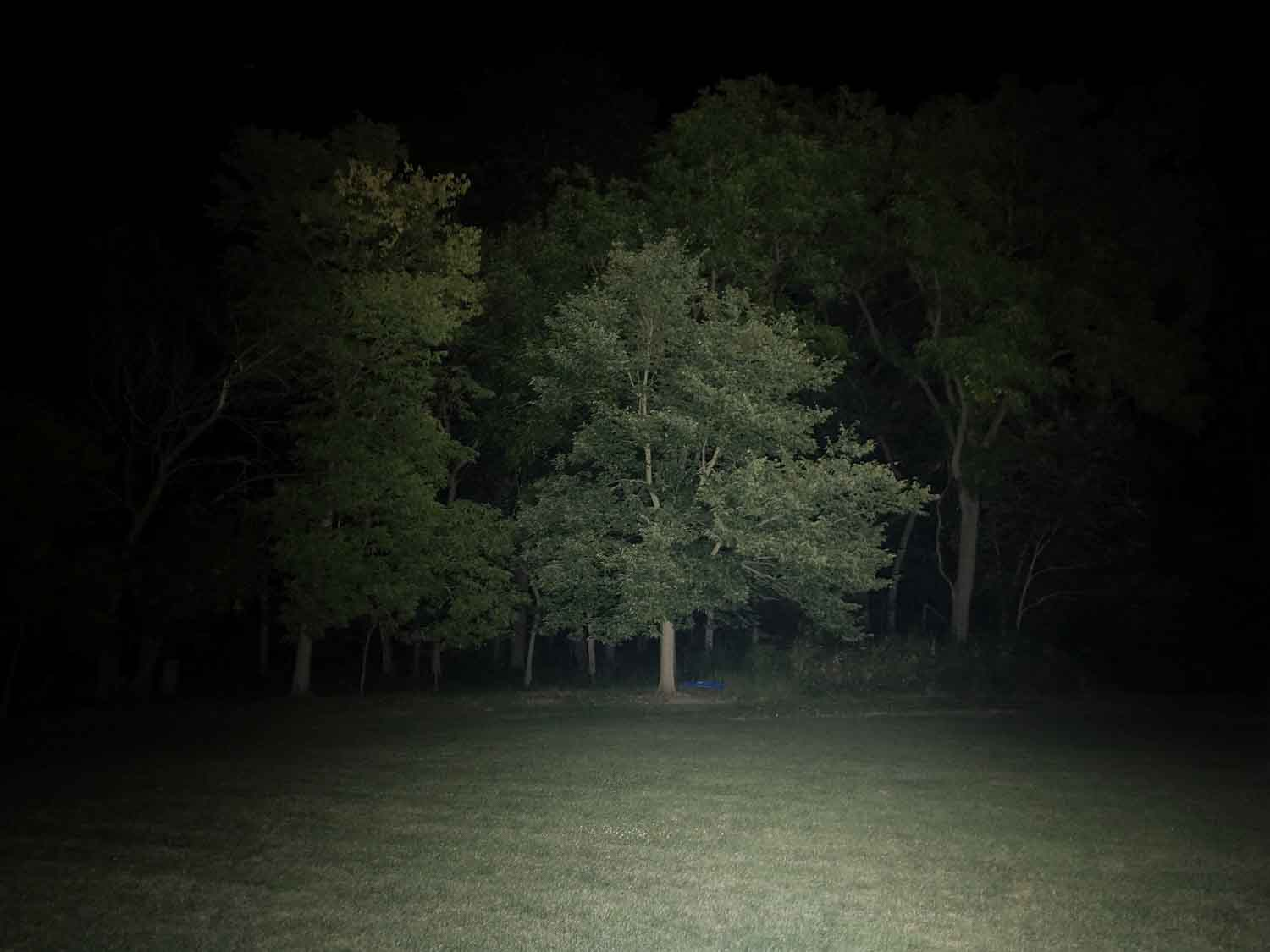 outdoor beamshot with trees