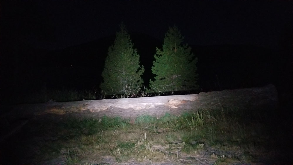 outdoor beam shot with trees